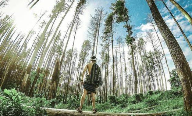 Hutan pinus bukit kura-kura ongakan besowo kediri