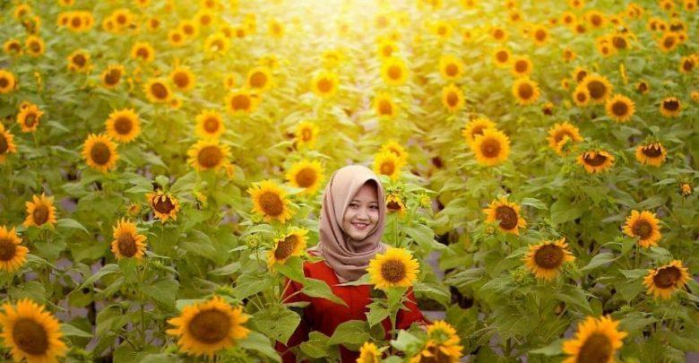 Kebun bunga matahari kediri hits