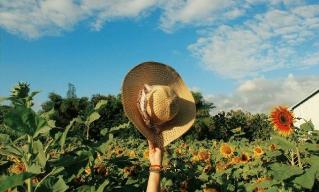 Taman wisata bermain dan edukasi kebun bunga matahari kediri