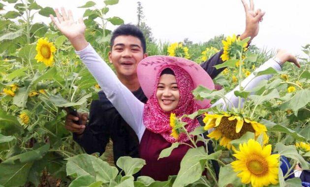 Wisata hangouts kediri kebun bunga matahari
