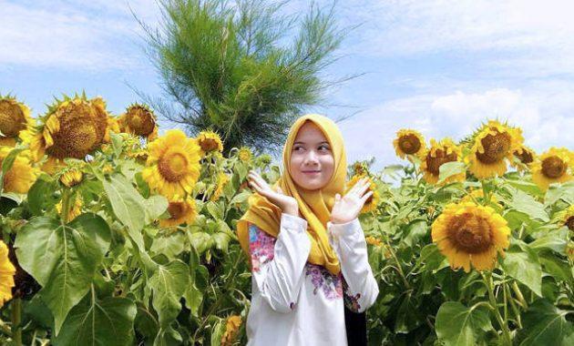Wisata kediri hits kebun bunga matahari