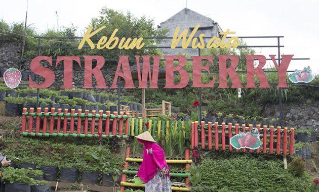 Harga tiket masuk kebun wisata petik strawberry pujon malang