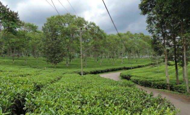 Rute Wisata Kebun Teh Wonosari Lawang Malang