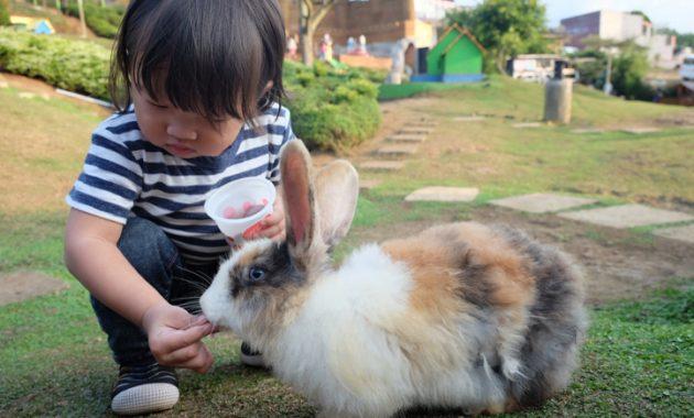 Taman kelinci pujon malang