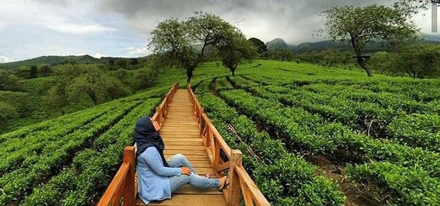 Wisata Kebun Teh Wonosari Lawang Malang