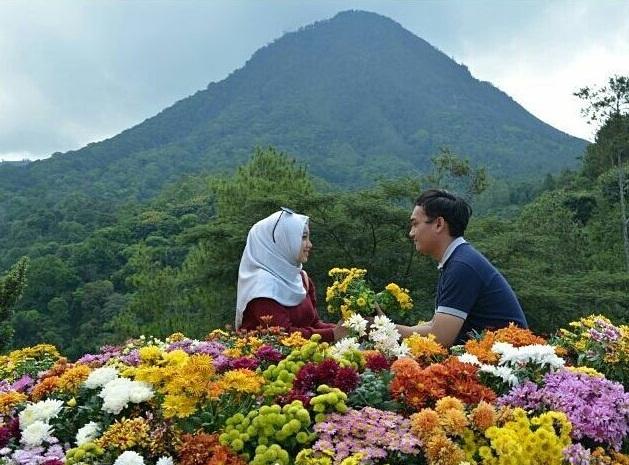 Tiket masuk wisata hits batu flower garden malang